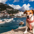 Traveling when You Have a Dog – Things to Do